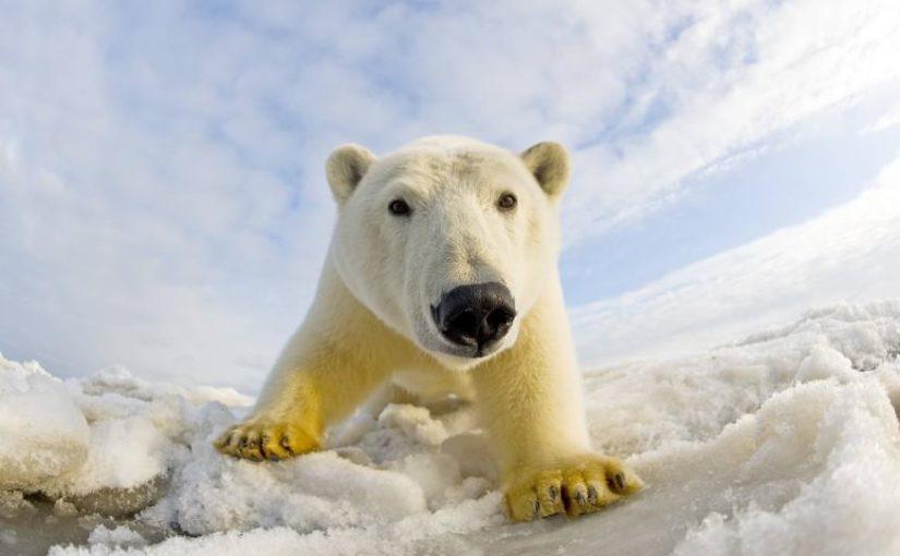 Trendwende beim arktischen Eis